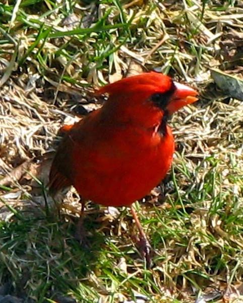 Profile of Mr. Cardinal