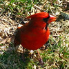 Profile of Mr. Cardinal