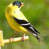 bird06