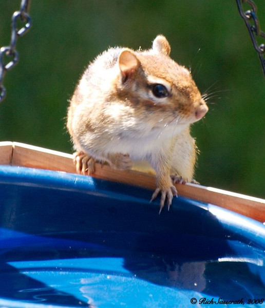 Chipmunk on Bath