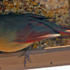 Female Cardinal Shot Through Window