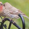 Finch Love