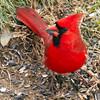 Slovenly Birds