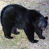 The Bear (ISO 3200 again)