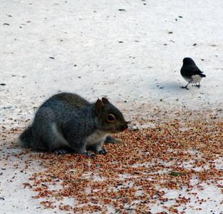 Squirrel & Bird