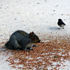 Squirrel & Bird