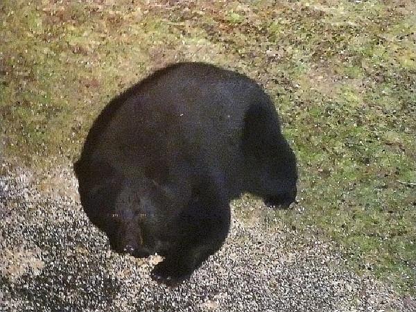 The Bear (ISO 3200)