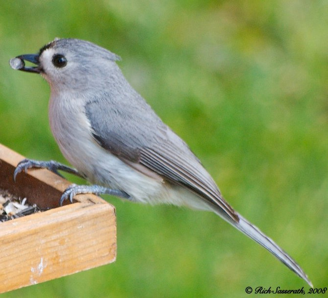 Tufted Titmouse Dining