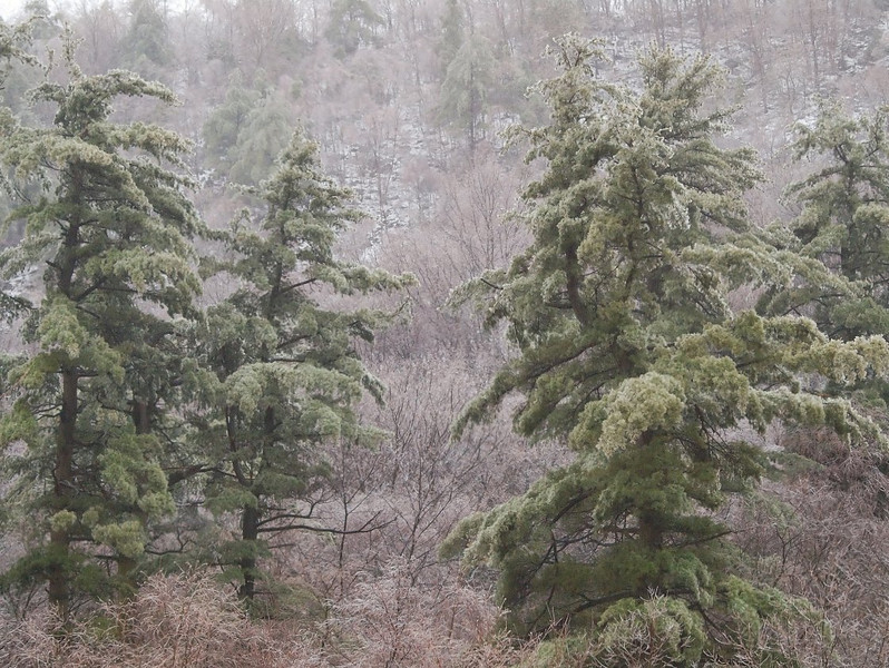 Soaked and Frozen Trees