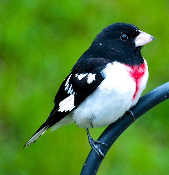 birdsweds04