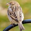 Content Sparrow