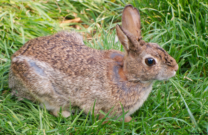 Bunny With Grass Meal