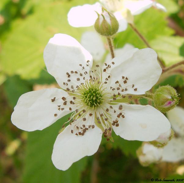 Macro of Tiny Flower