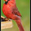 Cardinal Dining