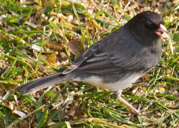 Cute little bird enjoying the unusual weather