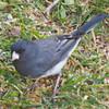 birds02b