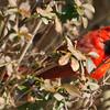 Peek-A-Boo Cardinal