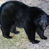 bear09