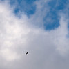 There's the Turkey Vulture At 70mm