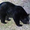bear08