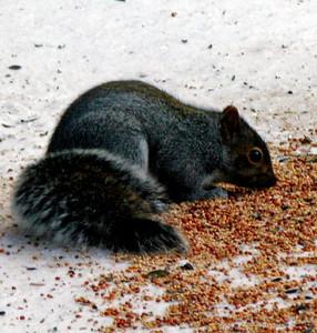 Munchin' on Seeds