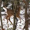 """Running Deer"""