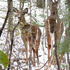 Deer Leaving Area