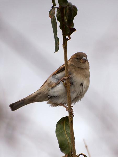 Little Bird on Tiny Branch