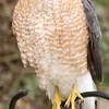 hawk02b