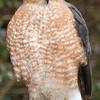 hawk020b