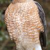 hawk021b