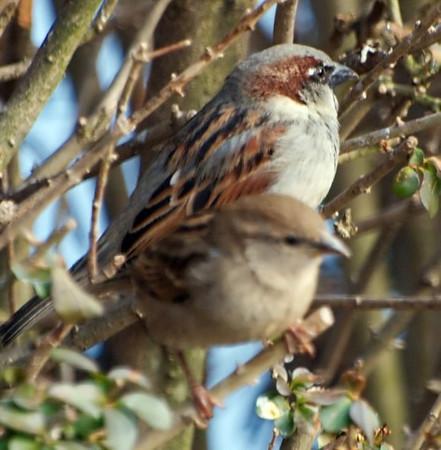 Focus on Rear Bird