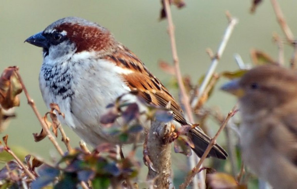Focus on Left Bird