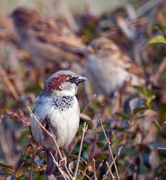 Focus on Front Bird
