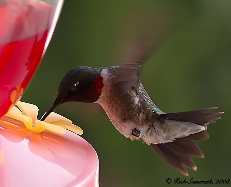 Love Those H-Birds!