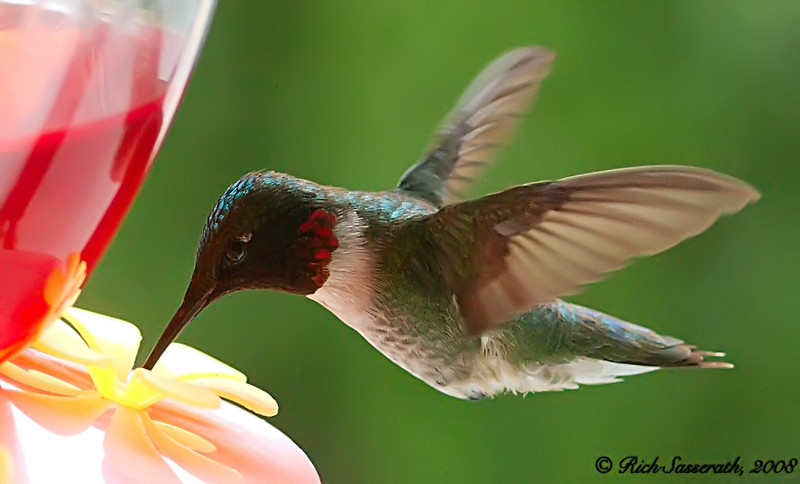 One of Two Hummingbirds on Our Feeder