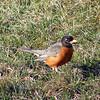 Robin in Brodheadsville, PA