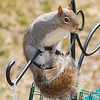 olga_d_squirrel04