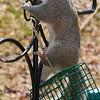 olga_d_squirrel09