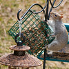 My Squirrel-Proof Feeder