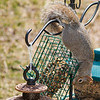 olga_d_squirrel03