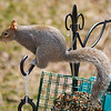 olga_d_squirrel05