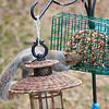olga_d_squirrel01