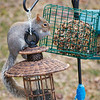 olga_d_squirrel02