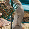 olga_d_squirrel08