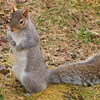 squirrel08