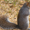 squirrel015