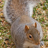 squirrel011