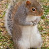 squirrel013