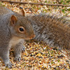 squirrel014